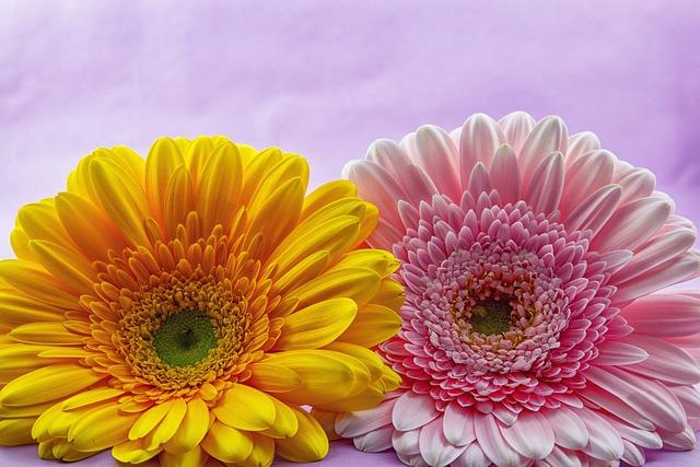 Flower, Gerbera, Plant, Nature, Flowers, Bright, Pink