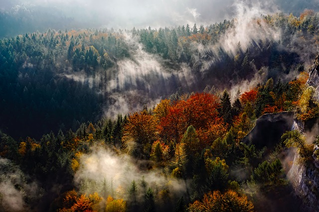 Germany, Mountains, Fog, Autumn, Fall, Forest, Trees