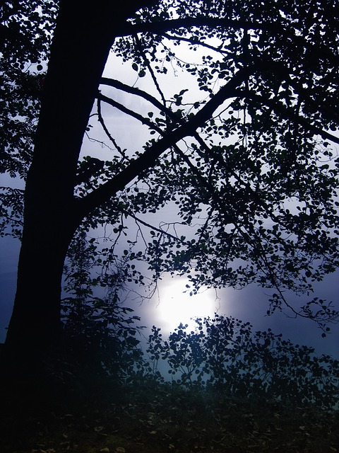 Tree, Back Light, Black Forest, Lake, Titisee, Germany
