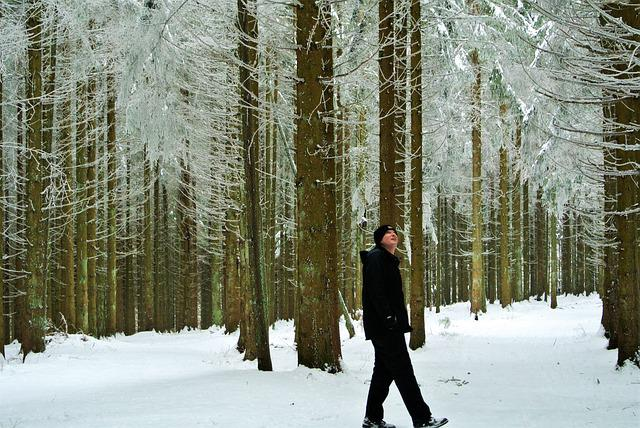 Black Forest, Germany, Schonach, Winter, Forest, Frost