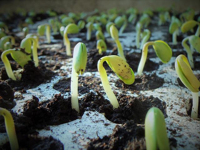 Plants, Soybean, Soy, Nature, Germination