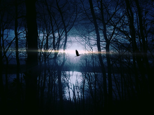 Bird, Fly, Gespentisch, Night, Weird, Night Sky, Lake