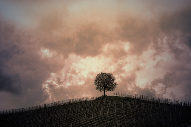 Hill, Tree, Vines, Clouds, Gewitterstimmung, Sepia