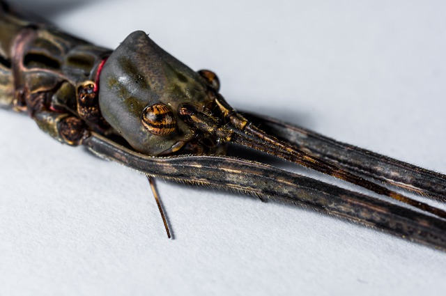 Stick Insect, Ghost Insect, Scare, Close