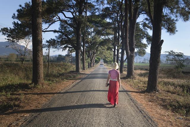 Pine Trees, Gia Lai, Two, Street, The Morning, Town