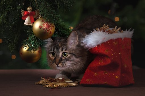 New Year's Eve, Cat, Gifts, Christmas Decorations