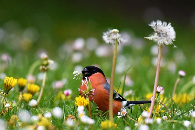 Bullfinch, Food, Eat, Gimpel, Red, Bird, Males, Animal