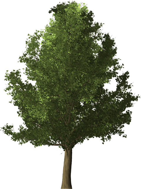 Ginkgo Tree, Ginkgo, Tree, Deciduous, Nature, Leaf