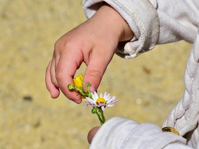 Child, Girl, Hand, Flower, Play, Nature, Summer, Ease