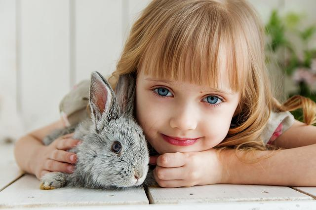 Rabbit, Hare, Baby, Girl, Studio, Toy, Beautiful, Cute