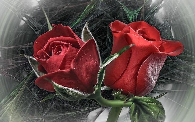 Rose, Flower, Love, Give, Romance