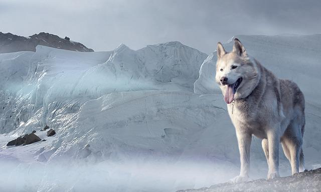 Husky, Dog, Glacier, Ice Age, Winter, Climate, Cold