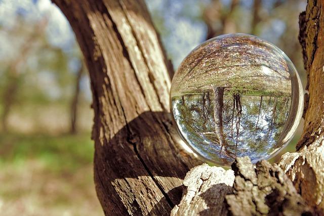 Pine, Conifers, Landscape, Glass Ball