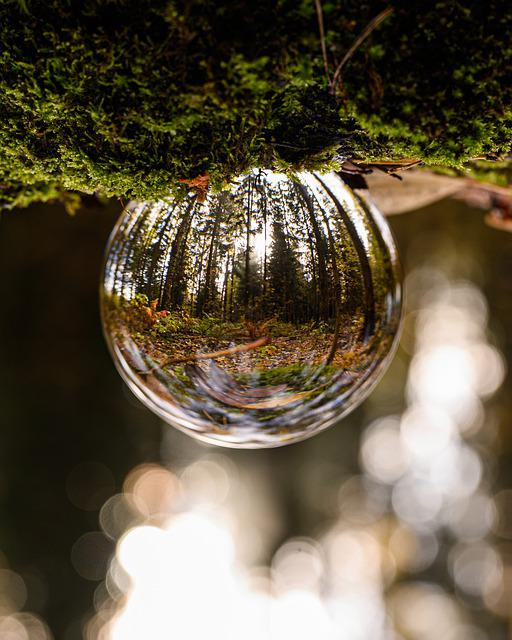 Glass Ball, Forest, Up, Down, Nature, Reflection