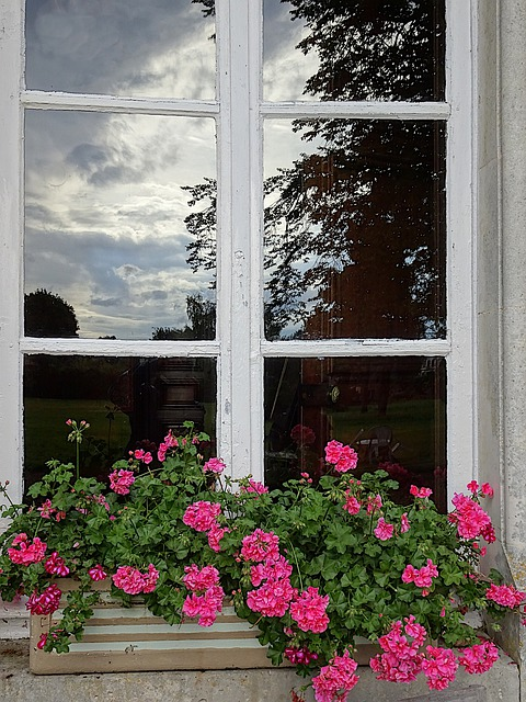 Reflections, Glass, Window, House, Field, Geraniums