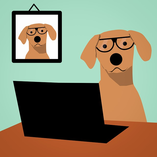 Dog, Laptop, Computer, Glasses, Spectacles, Office