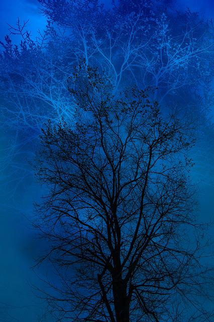 Tree, Blue, Black, Day, The Gloom, Gloominess, Mystic