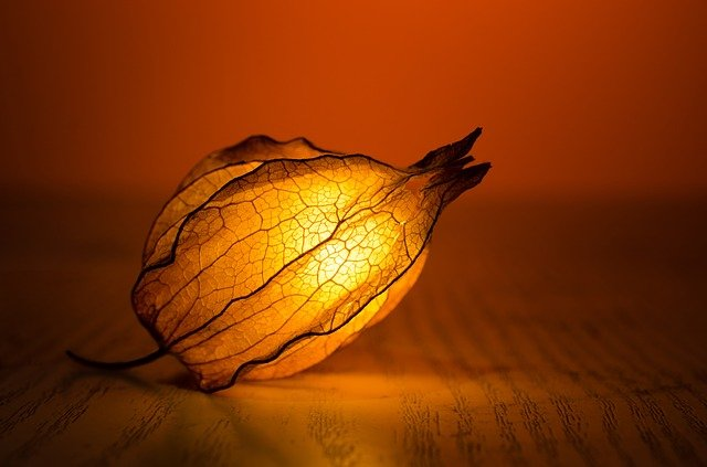 Light, Glow, Leaf, Exotic, Warm, Art, Backlit