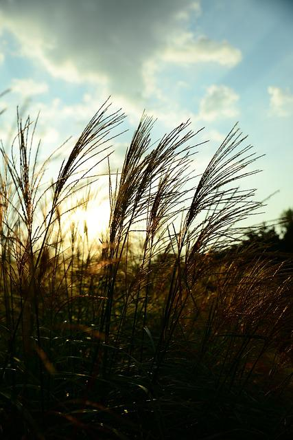 Reed, Glow, Sky, Nature, Background, Backlight, Light