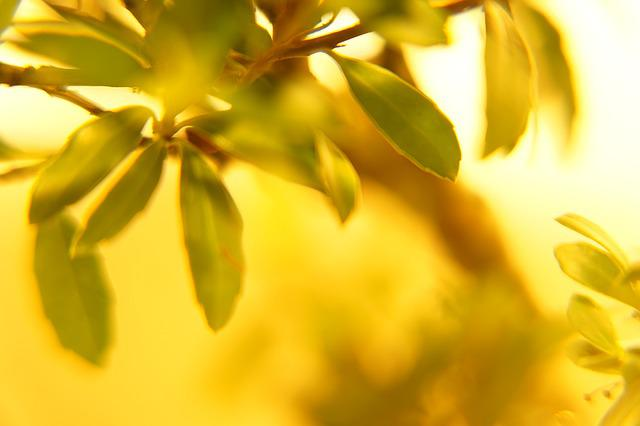 Leaves, Summer, Glow, Green, Yellow, Nature, Gold, Tree