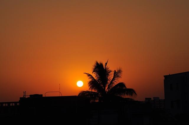 Sun, Sunset, Coconut Palm, Tree, Silhouette, Sky, Glow