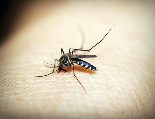 Mosquito, Malaria, Gnat, Bite, Insect, Blood, Pain