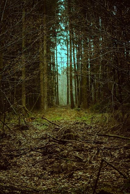 Forest, Goal, Landscape, Mystical, Fantasy, Away