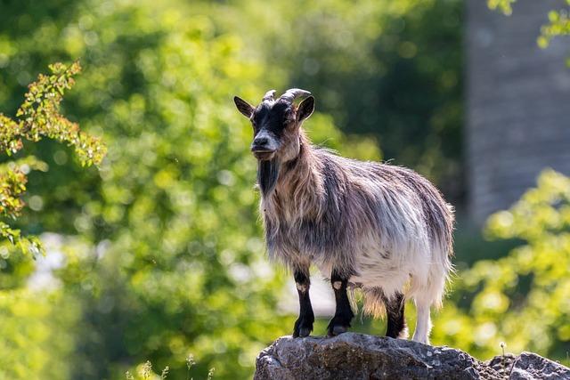 Goat, Horns, Animal, Mammals, Billy Goat, Happy