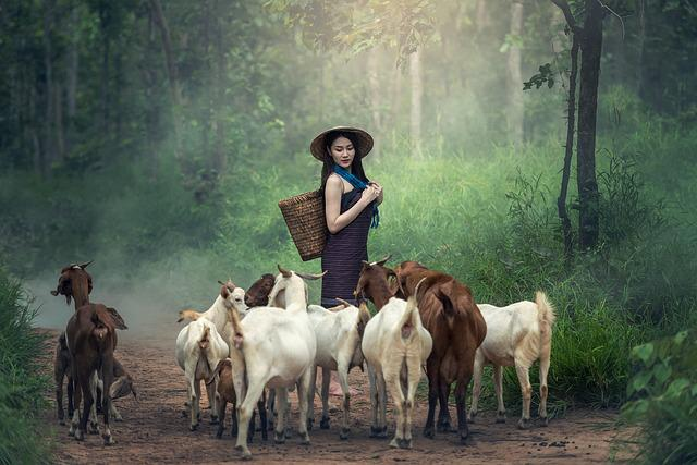 Animals, Asia, Farmer, Farmland, Woman, Goat, Grass