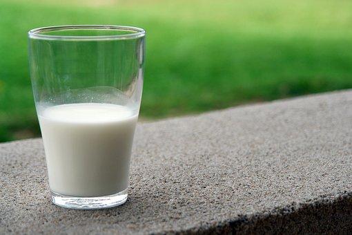 Drink, White, Milk, Goat, Milk Product, Food, Farm