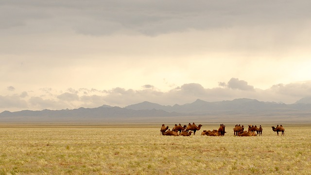 Mongolia, Gobi, Camels, Lighting, Steppe