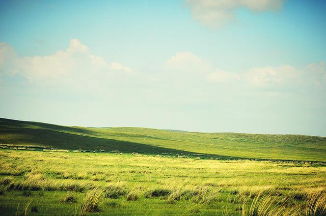 Prairie, Gol, White Cloud