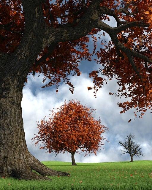 Autumn, October, Golden Autumn, Fall Foliage, Leaves