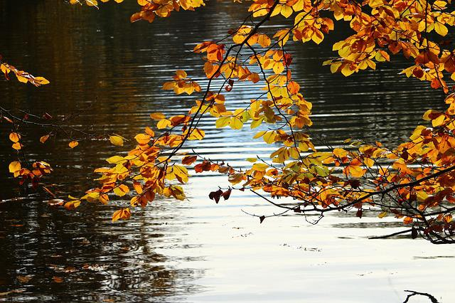 Autumn, Fall Foliage, Water, Pond, Golden Autumn