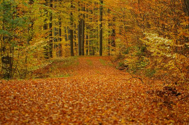Leaves, Autumn, Forest, Golden Autumn, Colorful