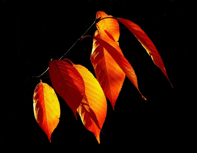 Leaves, Autumn, Fall Foliage, Golden Autumn, October