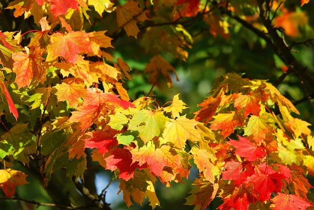 Autumn, Tree, Leaves, Red, Autumn Forest, Golden Autumn