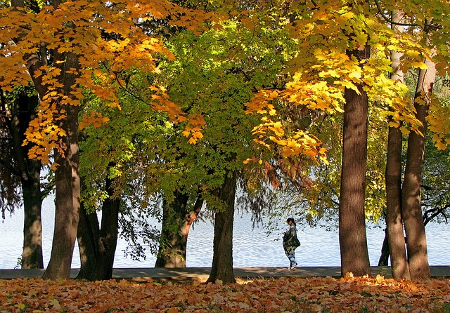 Autumn Landscape, Lake, Yellow Leaves, Golden Leaves