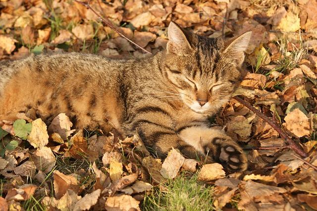 Rest, Lazybones, Kitten, Golden Leaves, Autumn