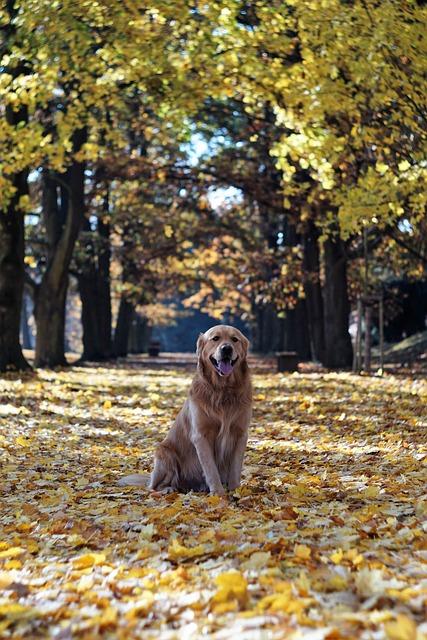 Golden Retriever, Autumn, Leaves, Trees, Alley