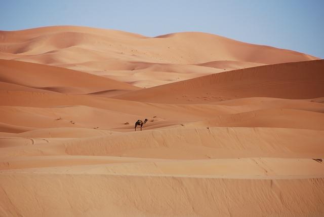 Desert, Sand, Dunes, Morocco, Golden Sand, Camel