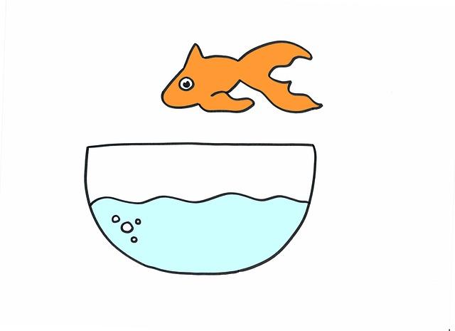 Goldfish, Fish, Pet, Aquarium