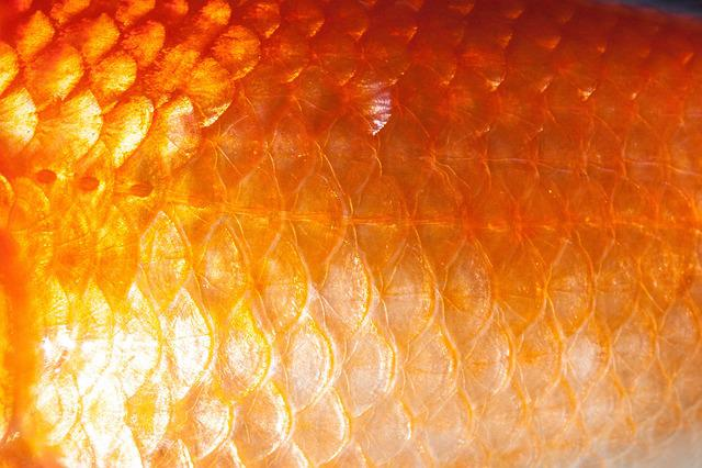 Scale, Fish Scales, Goldfish, Freshwater Fish