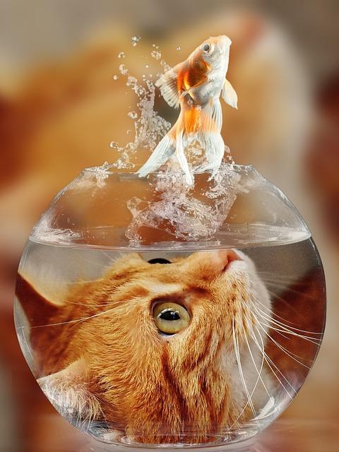 Cat, Face, Goldfish, Glass, Close, View, Eyes, Portrait