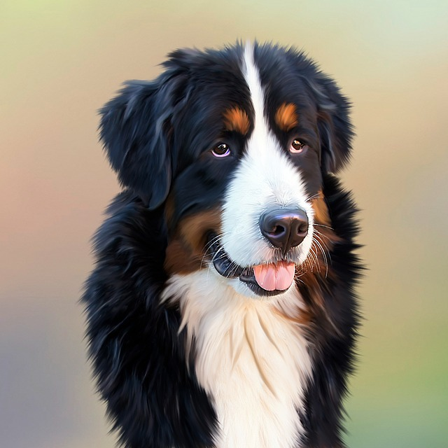 Dog, Bernese Mountain Dog, Senner Dog, Pet, Good