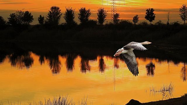 Sunset, Landscape, Goose, Greylag Goose, Evening Sky