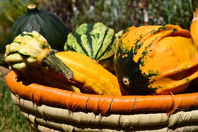 Pumpkin, Gourd, Autumn, Orange, Decoration
