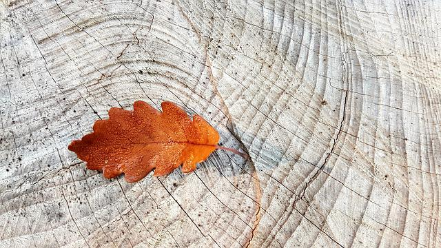 Autumn, Fall Foliage, Oak Leaf, Wood, Log, Grain