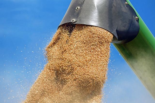 Wheat, Cereals, Wheat Grains, Grain, Harvest