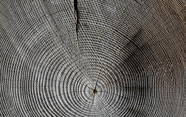 Wood, Annual Rings, Grain, Structure, Tree, Texture